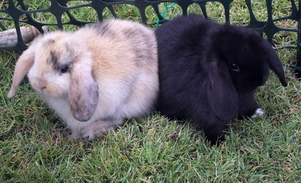 When they were babies: April 2010