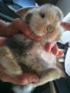 Flopsie baby pix