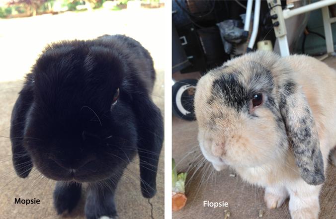 Flopsie & Mopsie selfies 7/4/14