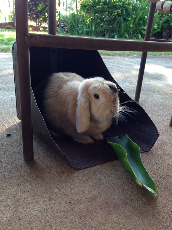 Flopsie sitting in leaf bin