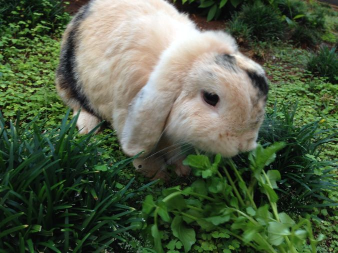 Flopsie eating watercress