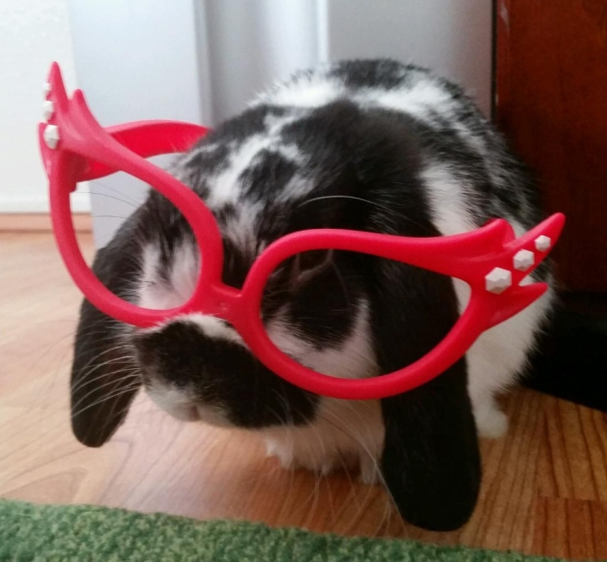 Rabbit wearing glasses