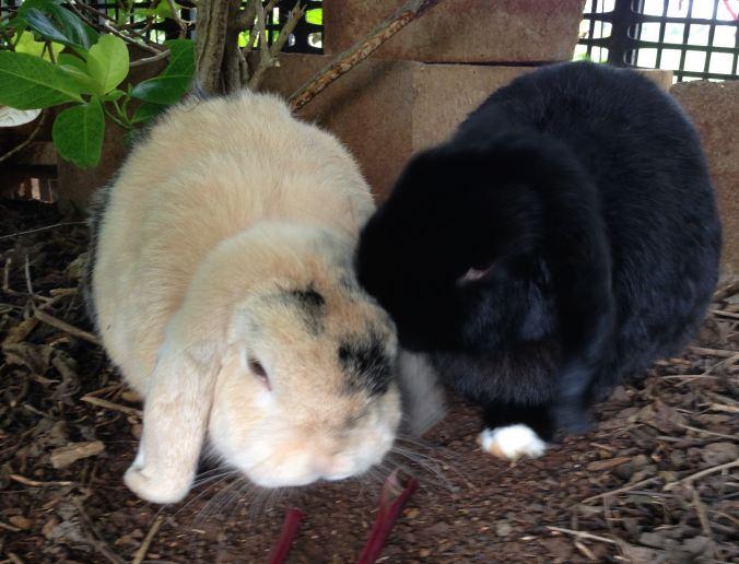 Mopsie grooming Flopsie