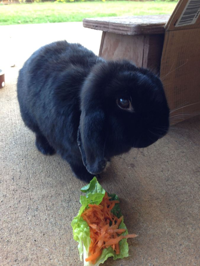 Mopsie and carrot salad
