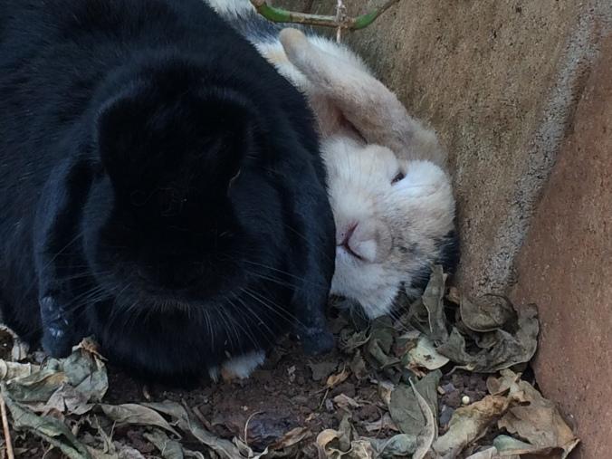 Rabbits_wefie_052515
