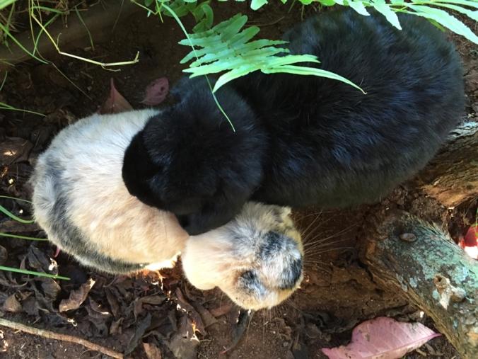 Rabbits_cuddling