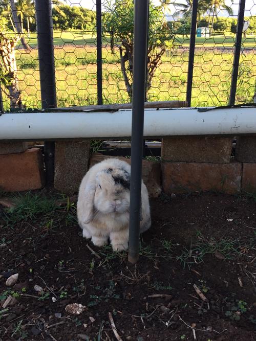 Flopsie_Hiding