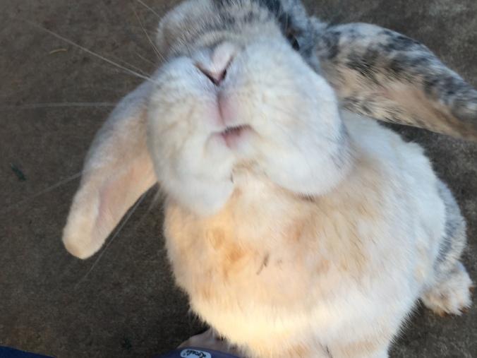 Flopsie_selfie