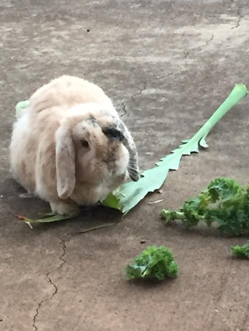 Flopsie_ti_leaf