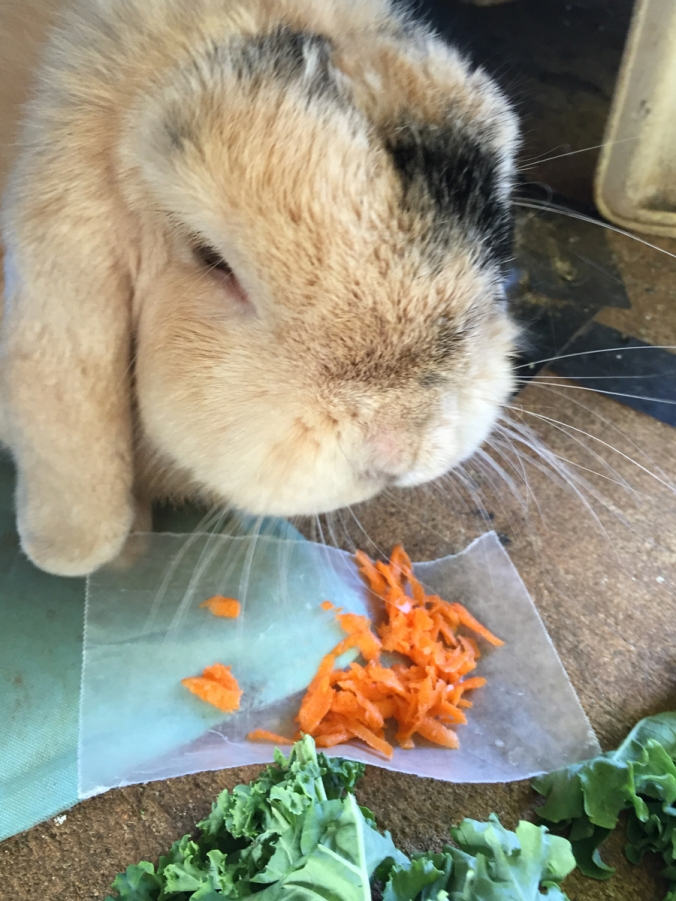 Grated_Carrots_080116
