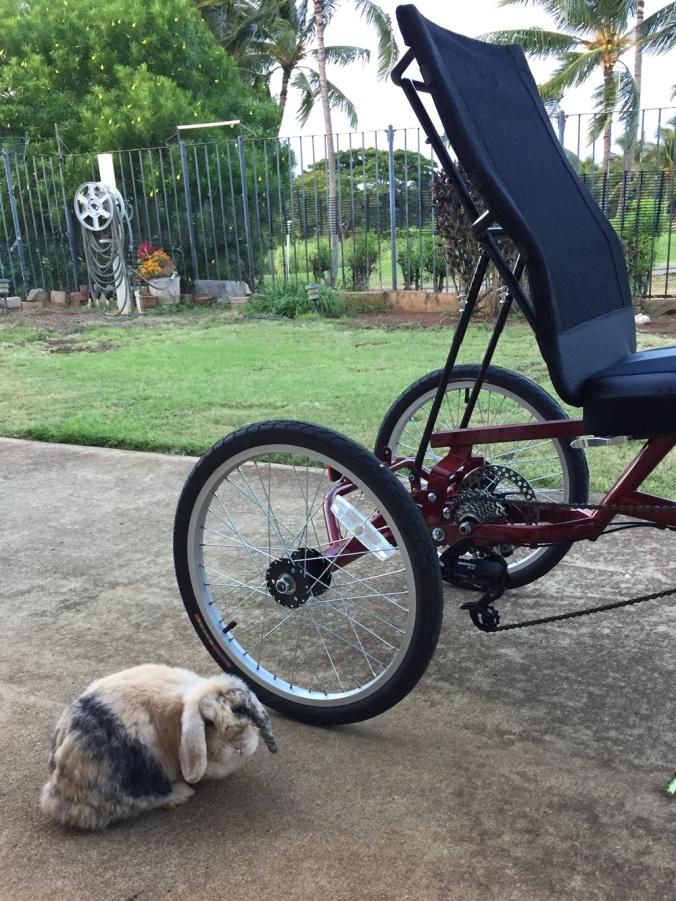 flopsie_grandpas_wheels